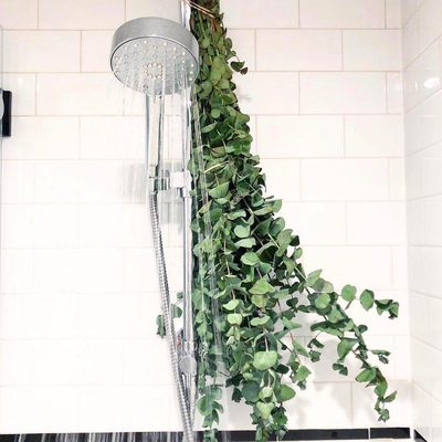 Eucalyptus showers are just the beginning 🌿🚿 Tap the link in our bio to learn how to incorporate aromatherapy into your everyday #showergoals #aromatherapy #spiritualgangster 📷: @hbfit