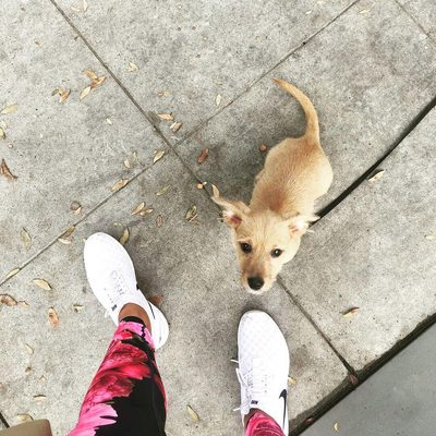 Spotted the #GSport Peonies Leggings out for a stroll. How are you wearing your #GSport this weekend? 📸: @sofiajasmine 🐶: @wagsandwalks