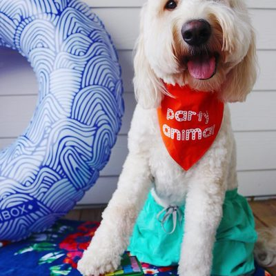 This party animal is all set for the beach with his Birchbox wave print floatie! Click the link in bio to get this dog... uh, we mean... the Ready, Set, Summer Limited Edition Box. | Regram: @mooseandmozart